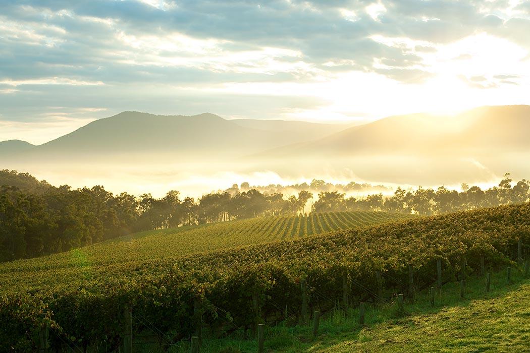 View over vineyards Yarra Valley